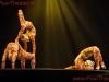 2013-cirque-du-soleil_willemdeleeuw-9