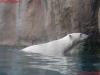 015-schrek-zoo